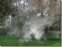 Pollen fog