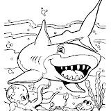 tiburon_7.jpg