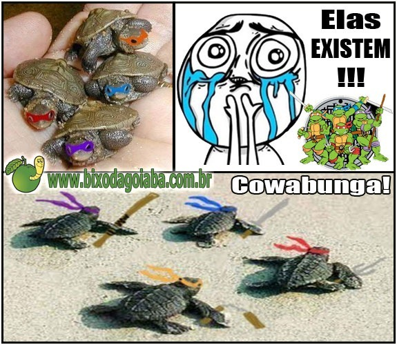 tartarugas-ninjas-elas-existem
