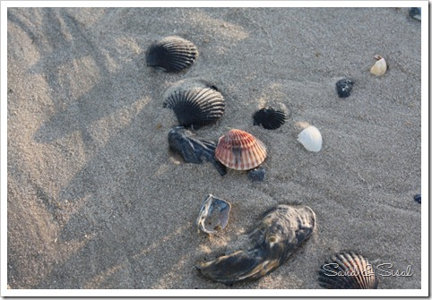 Shells on beach (800x533)