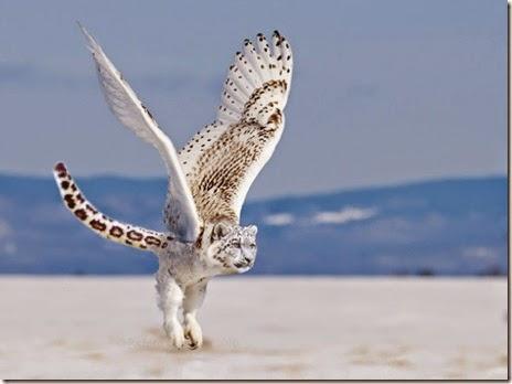 animal-photoshop-026
