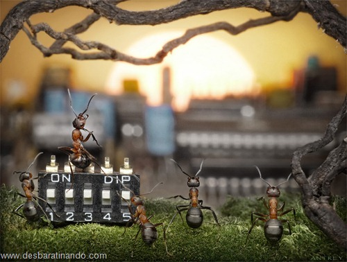 formigas inacreditaveis incriveis desbaratinando  (11)