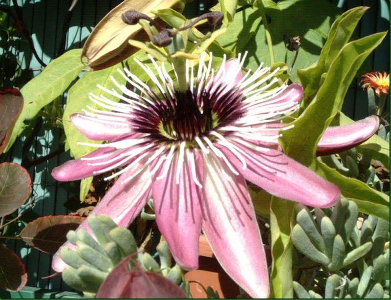 mis imágenes flores2005 006ag