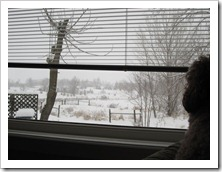 20120113_snow-day-inside_006