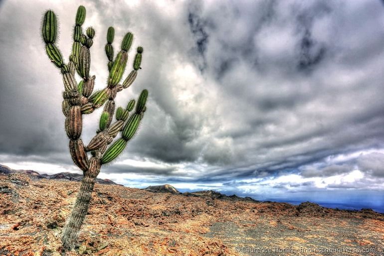 Kaktus, Galapagos