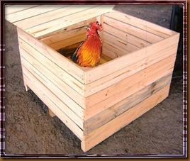 gallo-en-caja