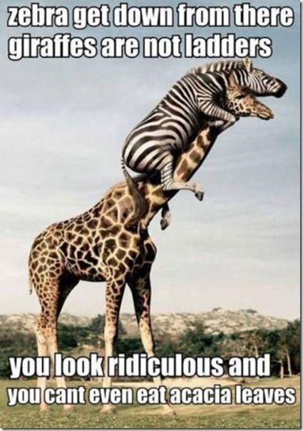 funny-captions-photos-29