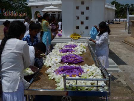 23. flori ofrande budiste.JPG