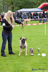 20100513-Bullmastiff-Clubmatch_30959.jpg