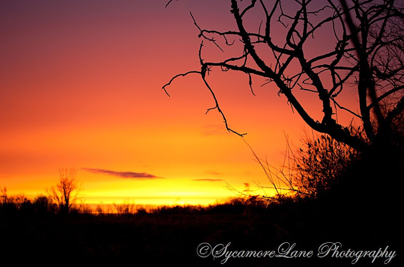 November2012 sunset-sycamoreLane Photography-w