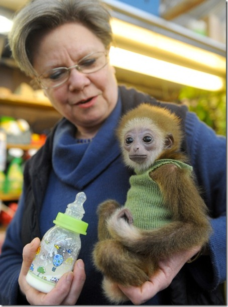 Zoo Keepers Hand Rear Baby Gibbon
