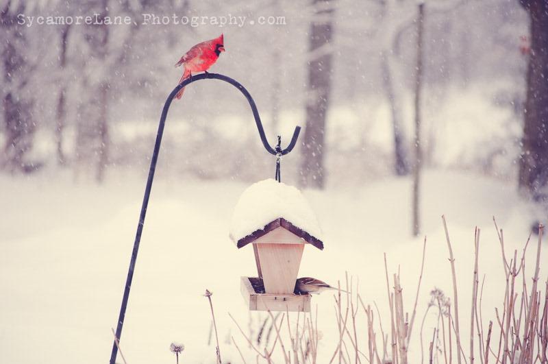 SycamoreLane Photography--3-4