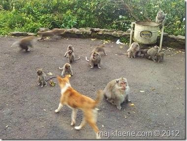57 monkies (640x480)