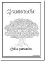 ceiba pentandra guatemala 1[2]
