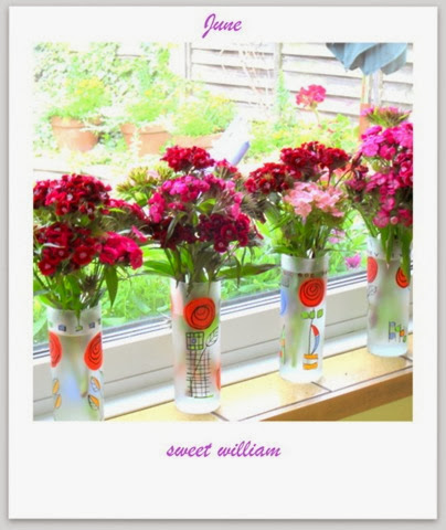 Sweet William posiesJune