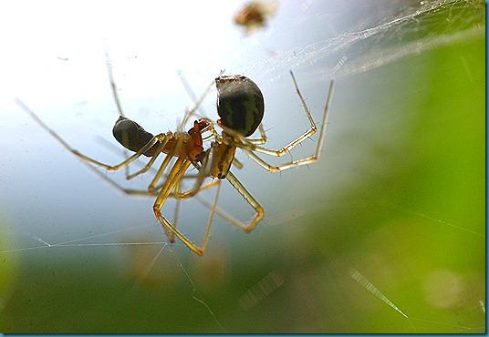 hämähäkit 120