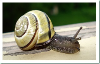 snail3