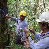 ④ 保護種の木にスプレーで印を付ける  / Tugging protection trees with paint spray before logging operation
