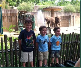 boys in front of elephants