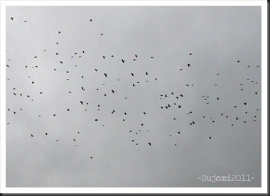 2011 11 27 DSCF9250aw