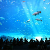 Georgia Aquarium - Atlanta GA