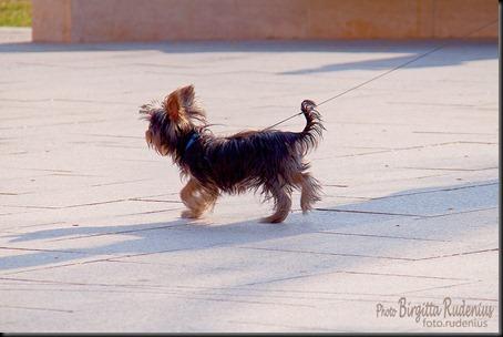 dog_20120322