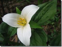 planting-flowers-1204-8