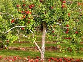 03-28-2012_edibleforest