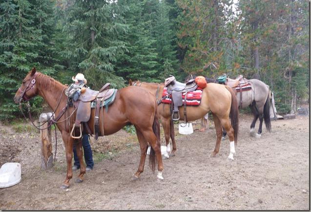 Horse trip 138