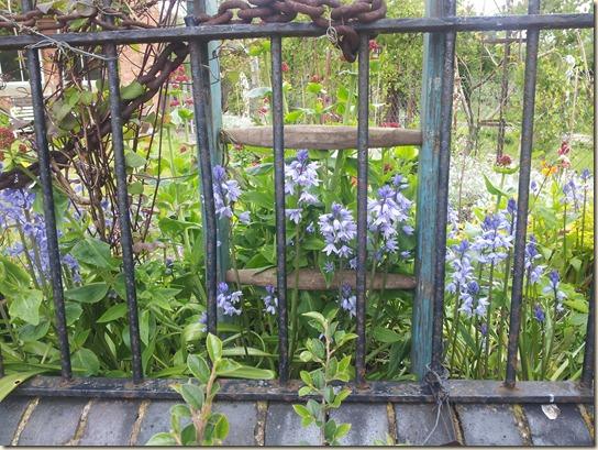 garden 013