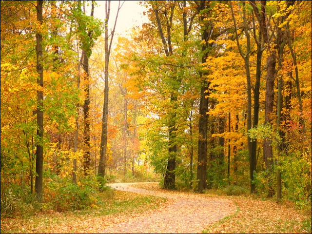 Geneva State Park, Ohio. In September 2014, the Ohio Supreme Court ruled 6-1 to allow part of a state wildlife area to be strip-mined for coal.  Photo: flickr / Mark K.