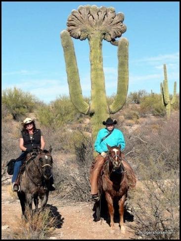 K's Crested Saguaro