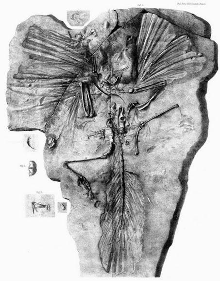 05_1863_owen_archaeopteryx