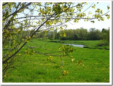 20120514_spring-property_009