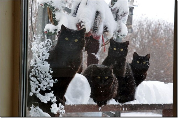 cats-play-snow-25