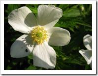 20120526_flowers_002