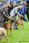20100513-Bullmastiff-Clubmatch_31175.jpg
