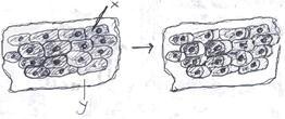 difusi dan osmosi