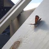 ハエや蝶?がなぜか寄ってきます