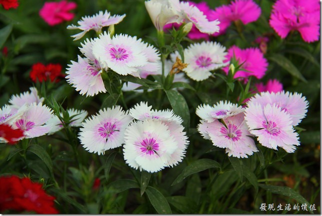 台南-2013台南公園百花祭