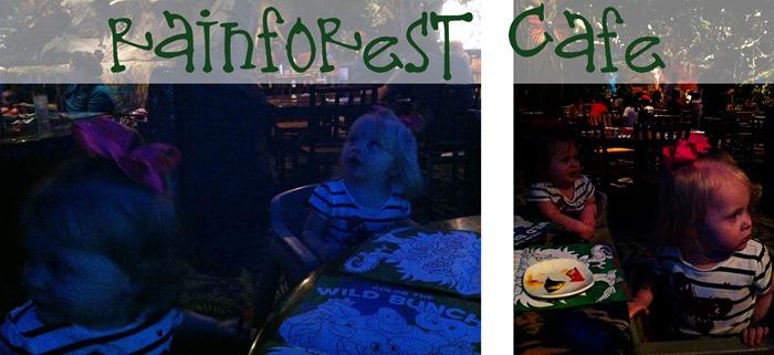 Rainforest Collage