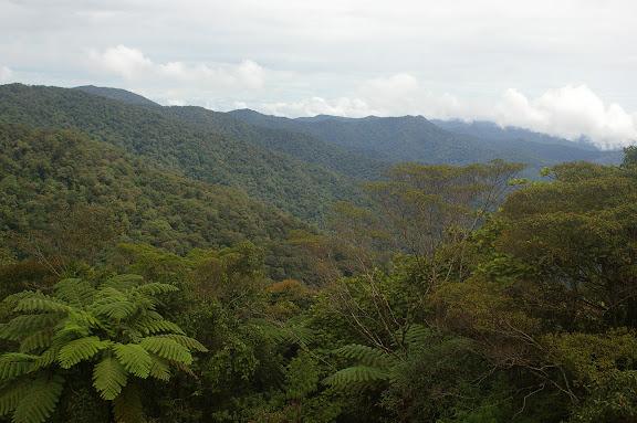 Crocker Range, 30 km nord-ouest de Tambunan (Sabah, Malaisie, Bornéo), 18 août 2011. Photo : J.-M. Gayman