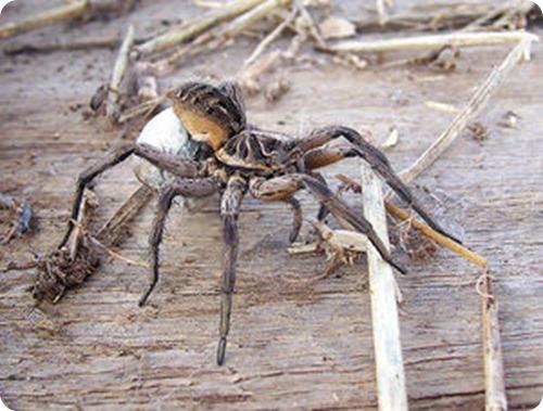 insectos, arañas , venenos