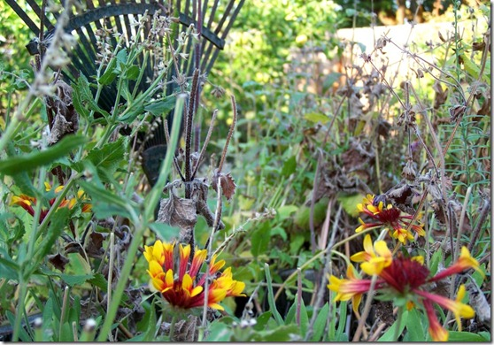 blanket flowers and rake