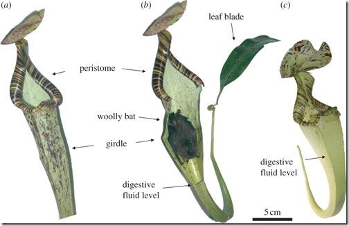planta-carnivora