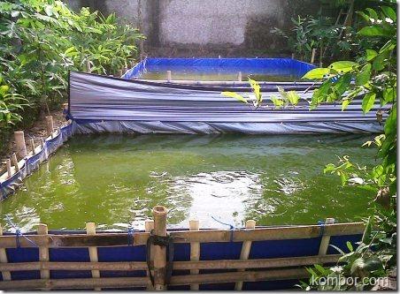 kolam terpal lele 03