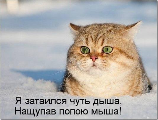 kotomatritsa_V3