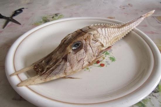 Peixe da Malásia 01
