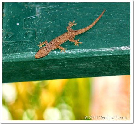 GeckoIMG0202LLJV