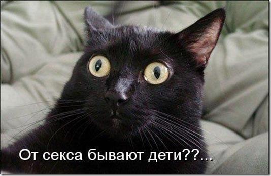 1246349686_jivotnie_33